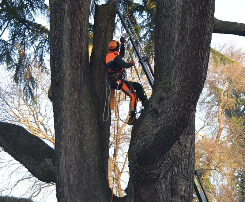 CHE COS'E' IL TREECLIMBING? (L'arrampicata sull'albero)
