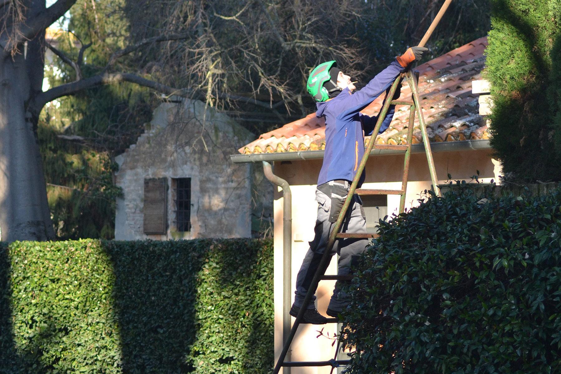 Alessio Contiero Tree climber Arboricoltore