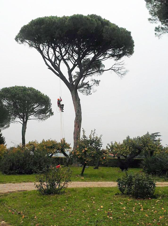 Treeclimbing.1