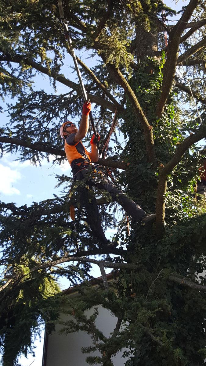 Potatura in treeclimbing