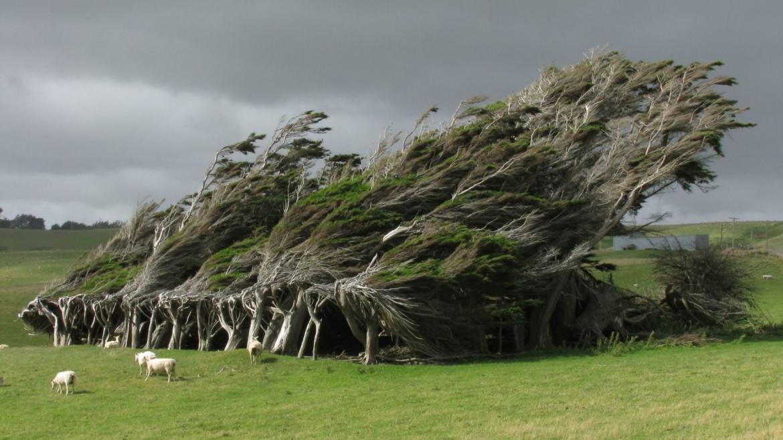 Gli alberi, il vento e le vele