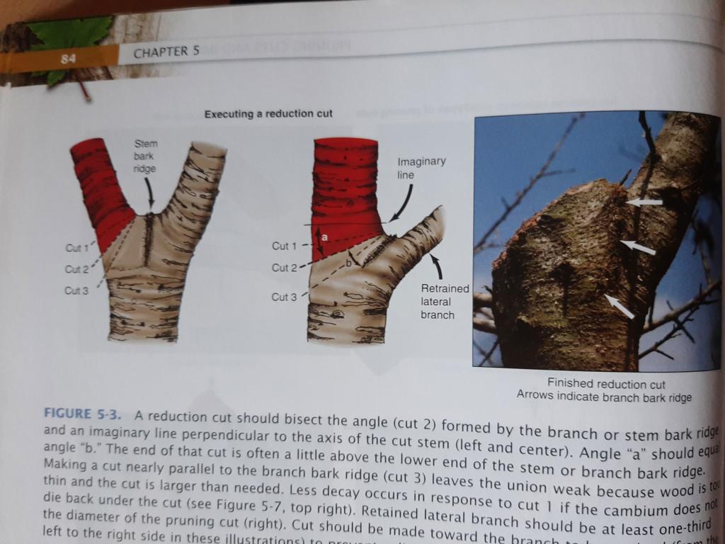 Libro Pruning